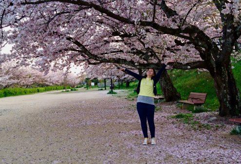 アニカ 桜
